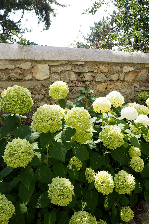 StyleAndMinimalism | Travel | Provence, France | Happy Among The Hydrangeas