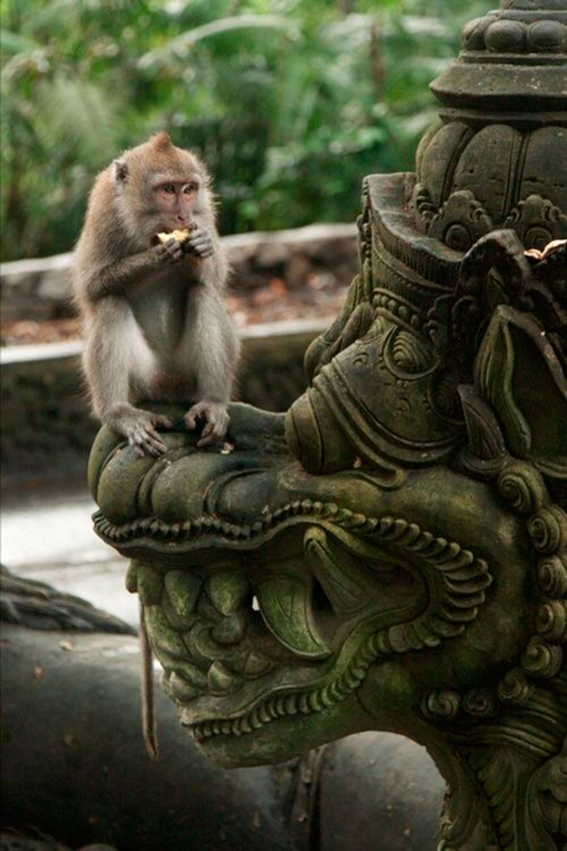 Style&Minimalism | Travel Bucket List 2016 | Bali | Enchanted Monkey Forest