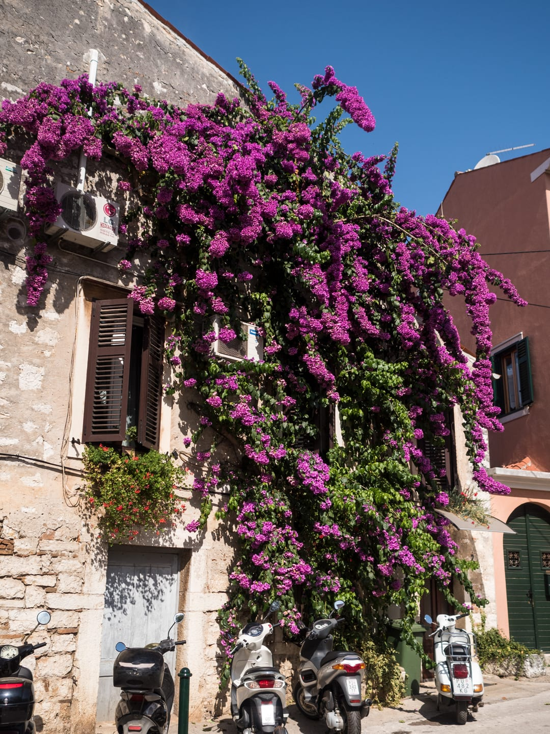 Bougainvillea covered wall - Rovinj, Croatia